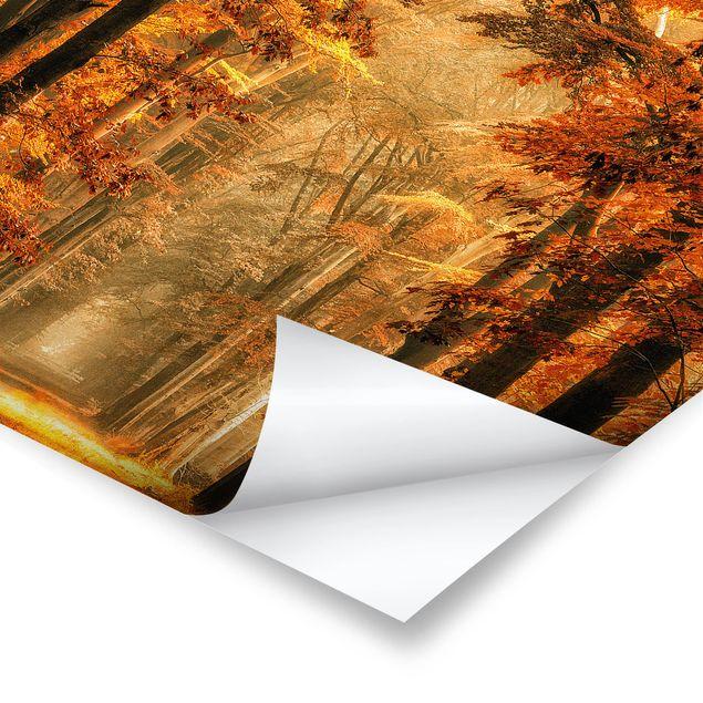 Poster - Märchenwald im Herbst - Quadrat 1:1