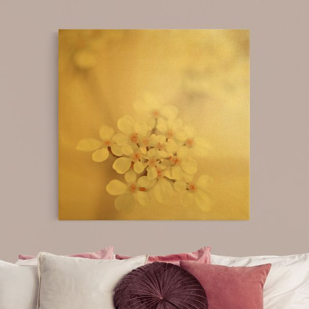 Leinwandbild Gold - Miniblüten im Rosanen Licht - Quadrat 1:1