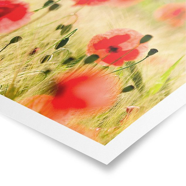 Poster - Summer Poppies - Panorama Querformat