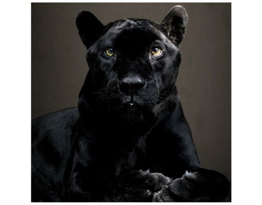 Beistelltisch - Black Puma