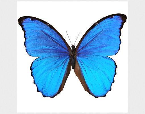 Beistelltisch - Blauer Morphofalter