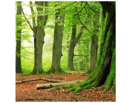 Beistelltisch - Mighty Beech Trees