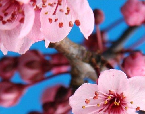 Beistelltisch - Kirschblüte