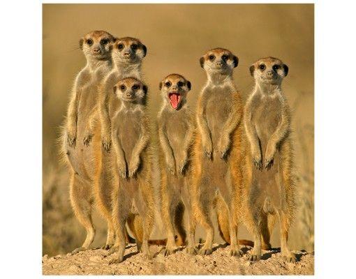 Beistelltisch - Meerkat Family