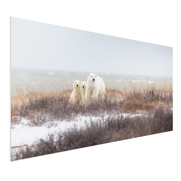 Forex Fine Art Print - Eisbärin und ihre Jungen - Querformat 1:2