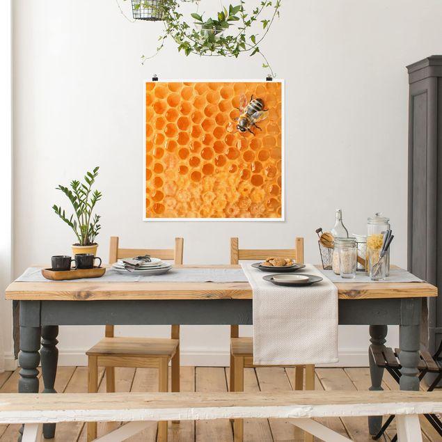Poster - Honey Bee - Quadrat 1:1