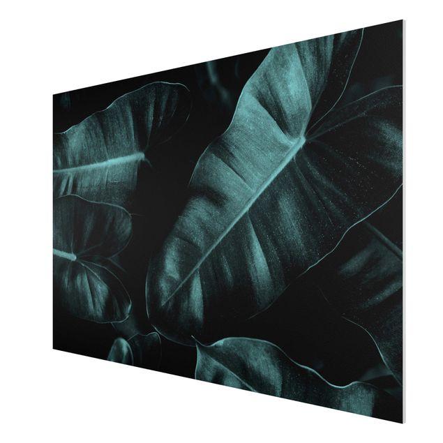 Forex Fine Art Print - Dschungel Blätter Dunkelgrün - Querformat 2:3