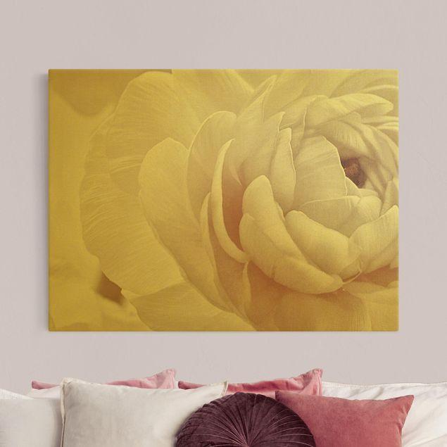 Leinwandbild Gold - Weiße Blüte im Blütenmeer - Querformat 4:3
