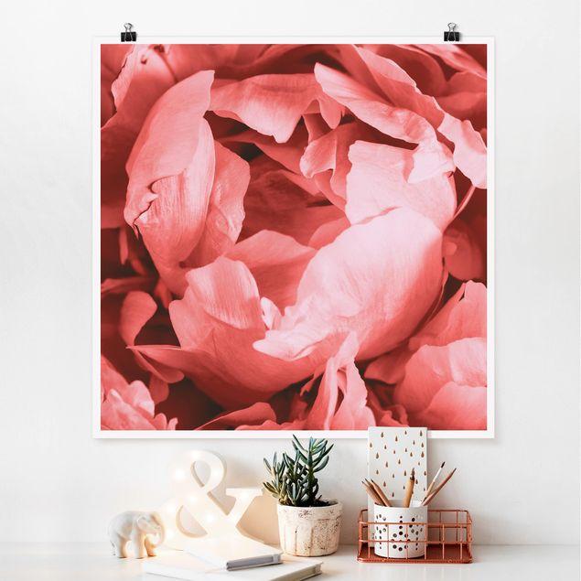 Poster - Pfingstrose Blüte Koralle - Quadrat 1:1