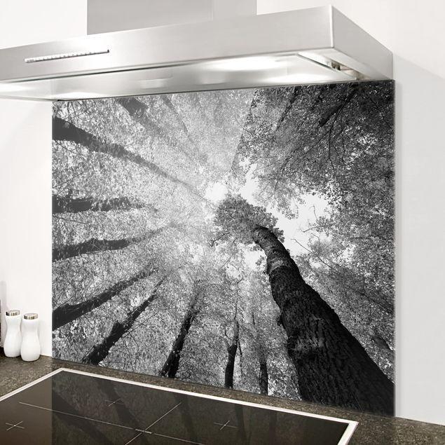 Glas Spritzschutz - Bäume des Lebens II - Querformat - 4:3