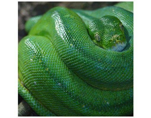 Beistelltisch - Schlange