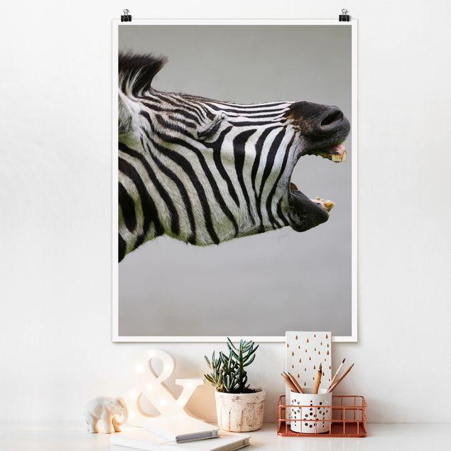 Poster - Brüllendes Zebra - Hochformat 3:4