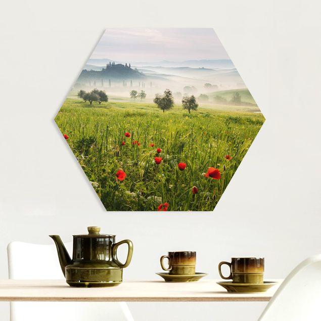 Hexagon Bild Forex - Toskana Frühling