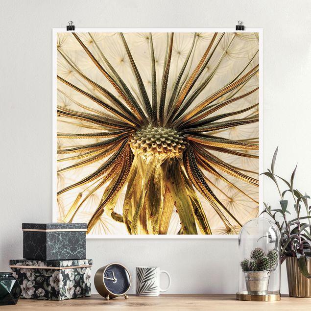 Poster - Dandelion Close Up - Quadrat 1:1