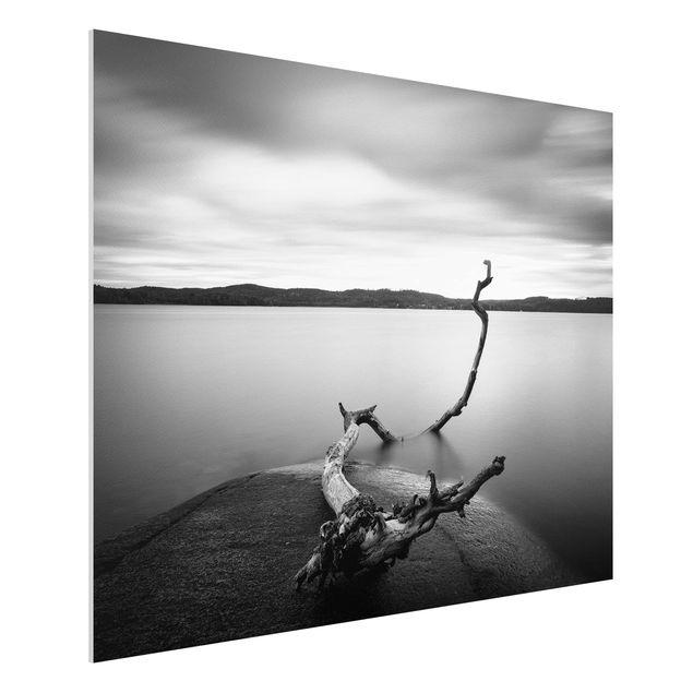 Forex Fine Art Print - Sonnenuntergang am See schwarz-weiß - Querformat 3:4