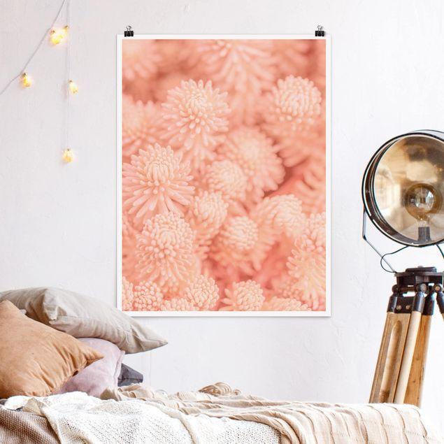 Poster - Rosa Blütenzauber Sedum - Hochformat 3:4