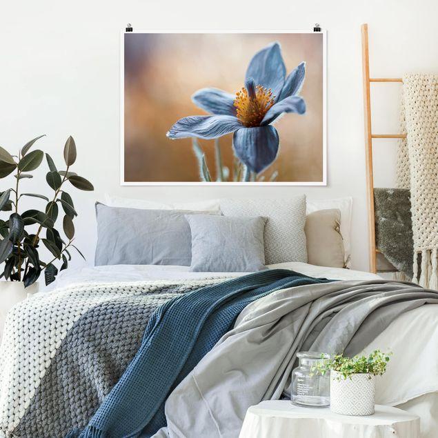 Poster - Kuhschelle in Blau - Querformat 3:4