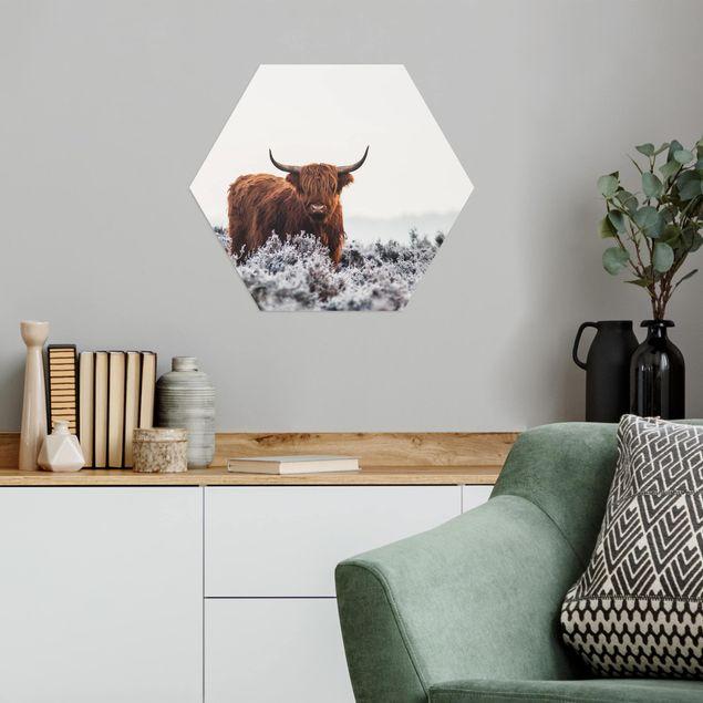 Hexagon Bild Alu-Dibond - Bison in den Highlands