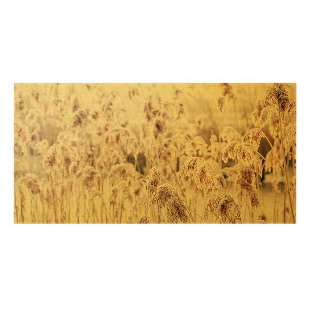 Leinwandbild Gold - Meer von sonnigem Schilfgras - Querformat 2:1
