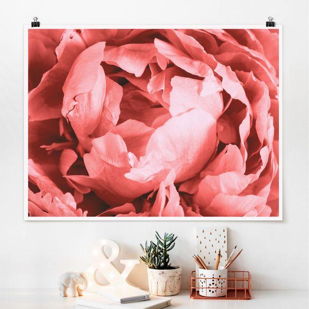 Poster - Pfingstrose Blüte Koralle - Querformat 3:4