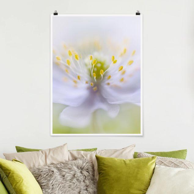 Poster - Anemonen Schönheit - Hochformat 3:4