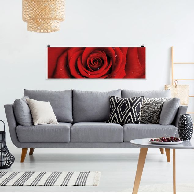 Poster - Rote Rose mit Wassertropfen - Panorama Querformat