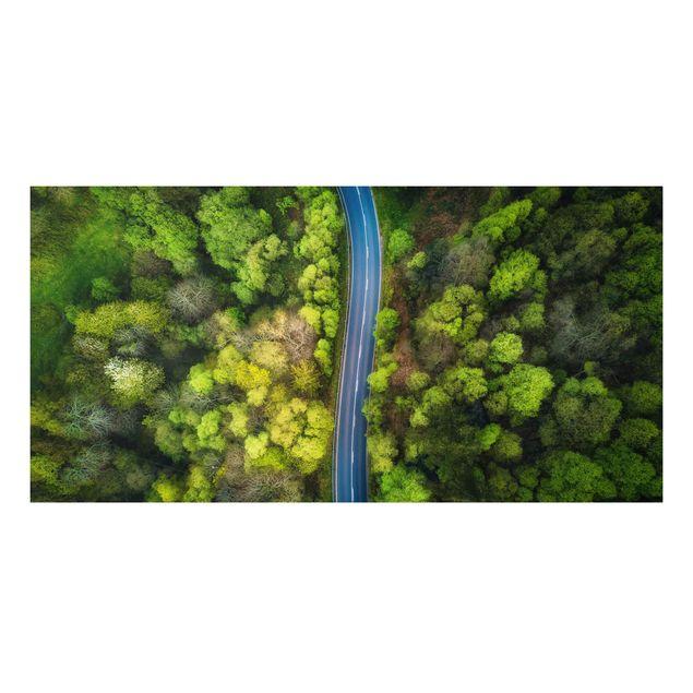 Forex Fine Art Print - Luftbild - Asphaltstraße im Wald - Querformat 1:2