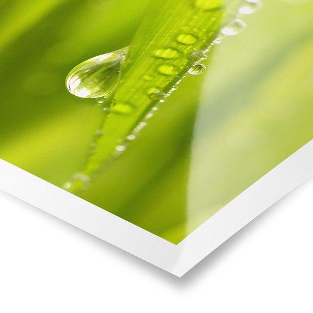 Poster - Morning Dew - Quadrat 1:1