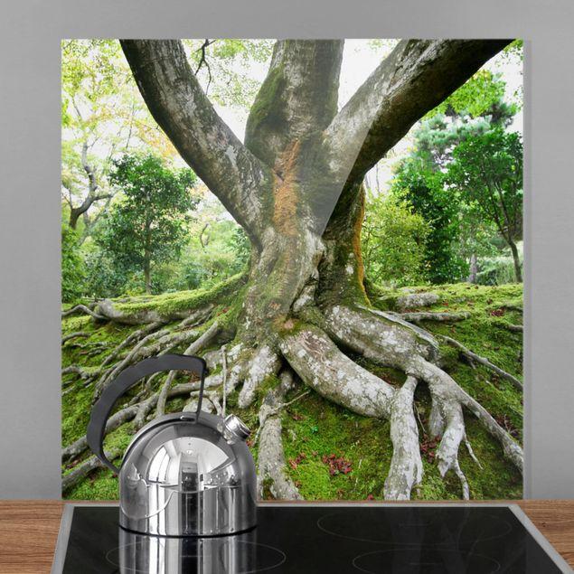 Glas Spritzschutz - Alter Baum - Quadrat - 1:1