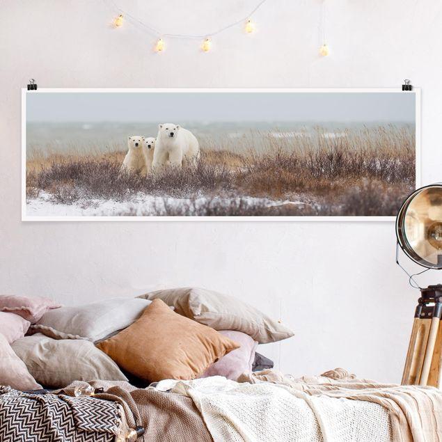 Poster - Eisbärin und ihre Jungen - Panorama Querformat