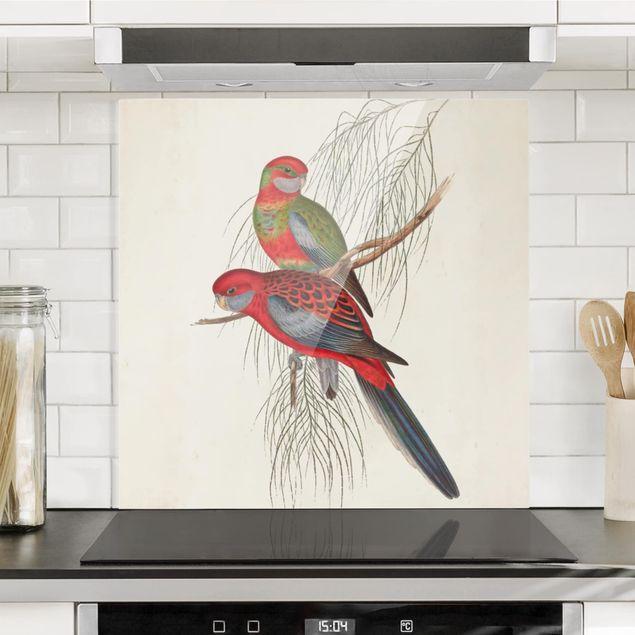 Glas Spritzschutz - Tropische Papageien III - Quadrat - 1:1
