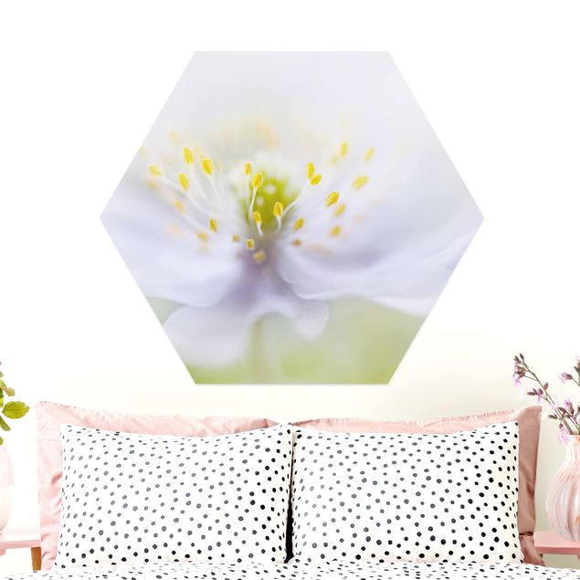 Hexagon Bild Alu-Dibond - Anemonen Schönheit