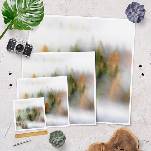 Poster - Nebelwald im Herbst - Quadrat 1:1