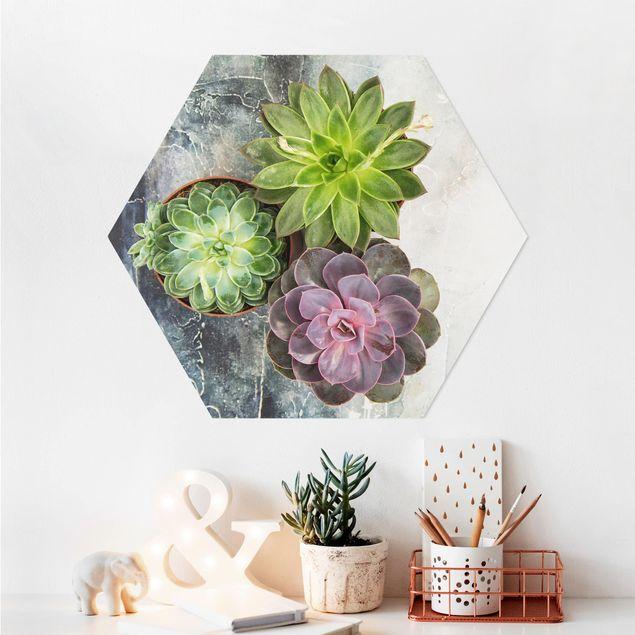 Hexagon Bild Alu-Dibond - Drei Sukkulenten