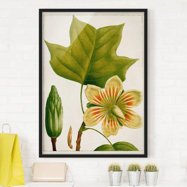 Bild mit Rahmen - Tableau Blatt Blüte Frucht IV - Hochformat 4:3