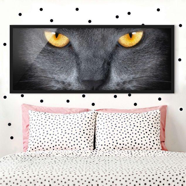 Bild mit Rahmen - Cats Gaze - Panorama Querformat