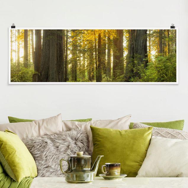 Poster - Redwood National Park - Panorama Querformat