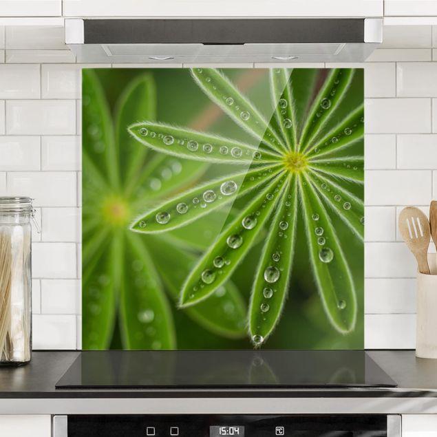 Glas Spritzschutz - Morgentau auf Lupinenblättern - Quadrat - 1:1