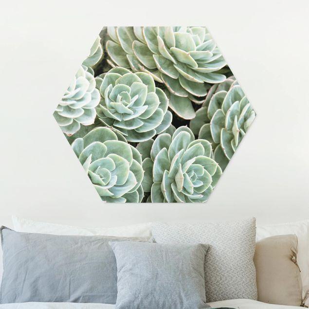 Hexagon Bild Forex - Grüne Sukkulenten