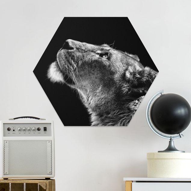 Hexagon Bild Forex - Portrait einer Löwin