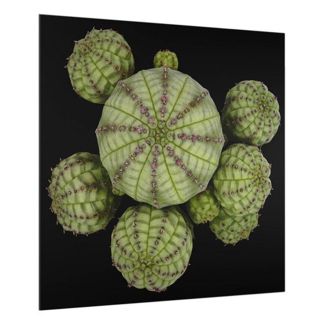 Glas Spritzschutz - Euphorbia - Seeigelwolfsmilch - Quadrat - 1:1
