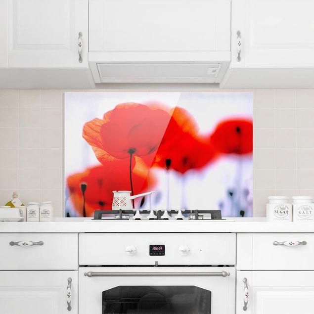 Spritzschutz Glas - Magic Poppies - Querformat - 3:2