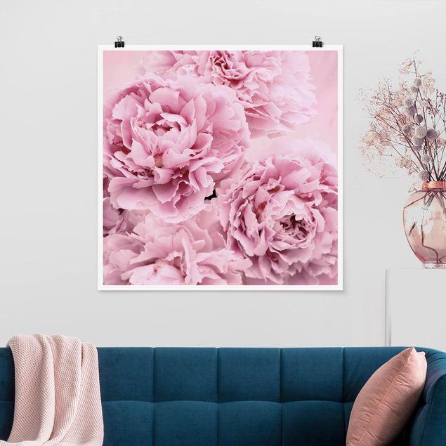 Poster - Rosa Pfingstrosen - Quadrat 1:1