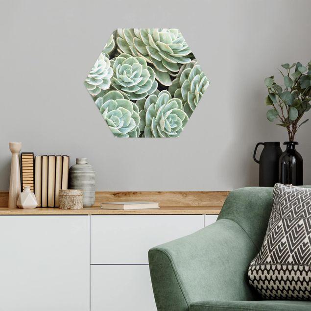 Hexagon Bild Alu-Dibond - Grüne Sukkulenten
