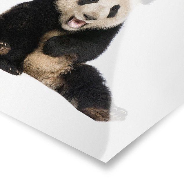 Poster - Lachender Panda - Quadrat 1:1
