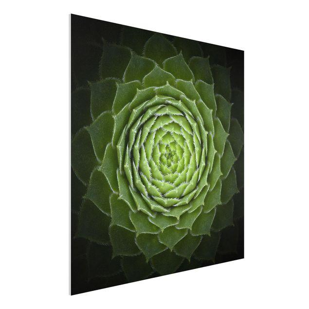 Forex Fine Art Print - Mandala Sukkulente - Quadrat 1:1