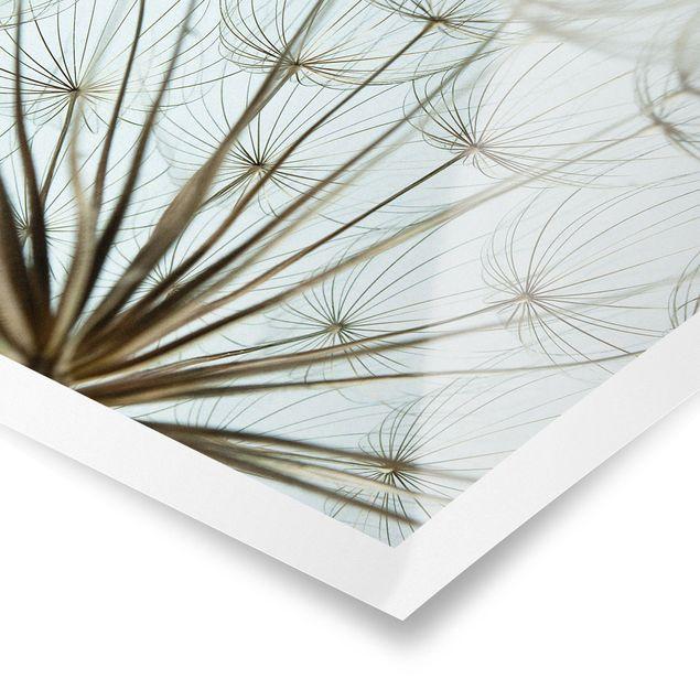 Poster - Schöne Pusteblume Makroaufnahme - Quadrat 1:1