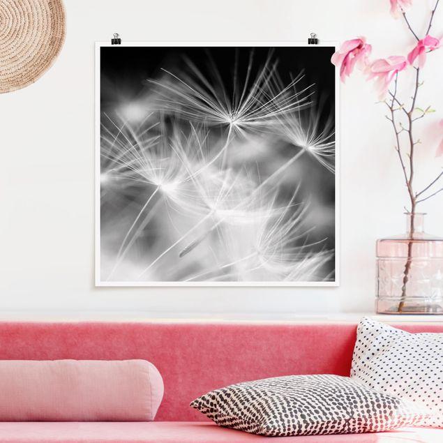 Poster - Bewegte Pusteblumen Nahaufnahme auf schwarzem Hintergrund - Quadrat 1:1