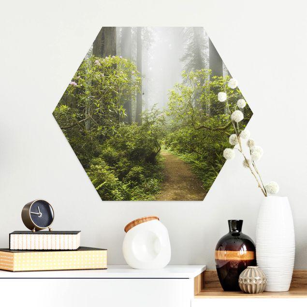 Hexagon Bild Alu-Dibond - Nebliger Waldpfad