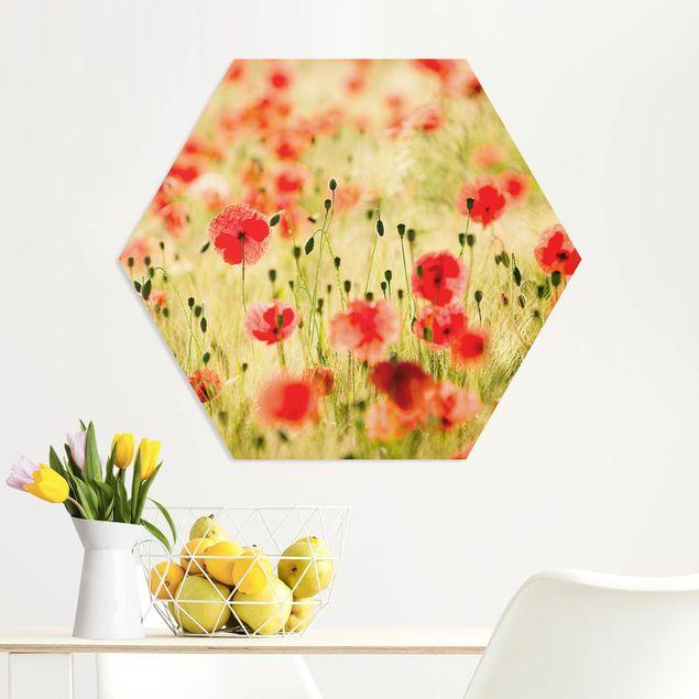 Hexagon Bild Forex - Summer Poppies
